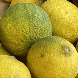 citron-vert-lavieclaire